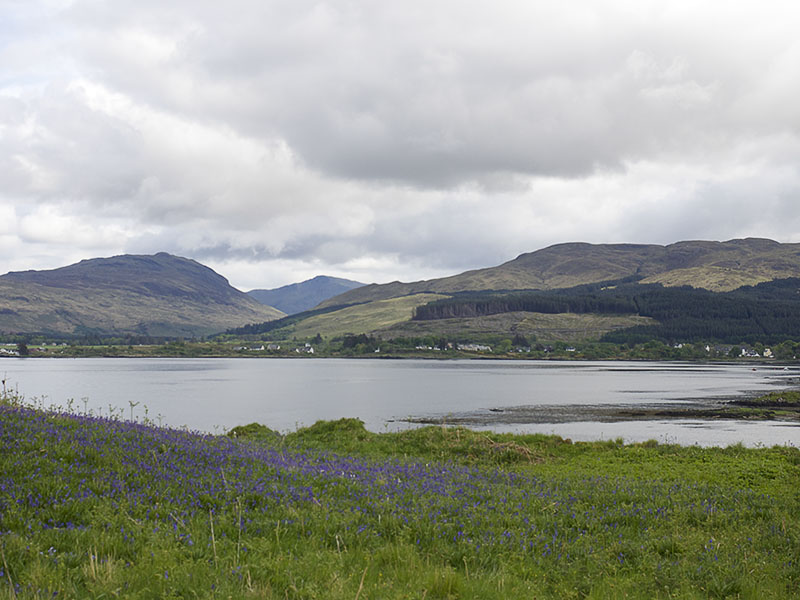 Uitzicht over Salen Bay, landschap met Bluebells